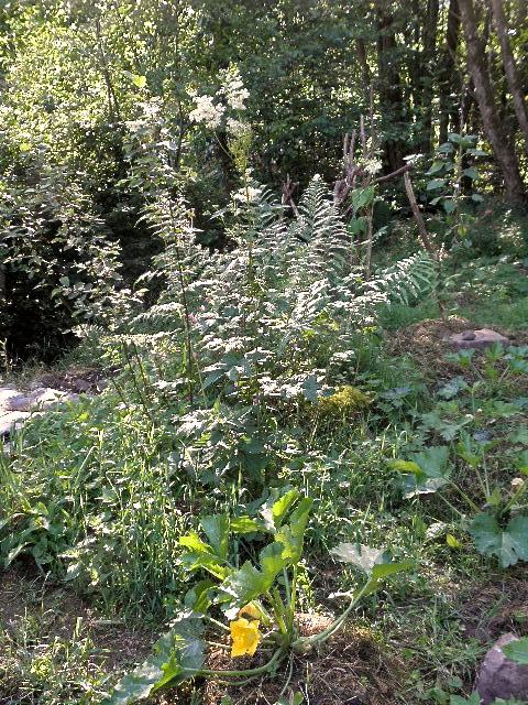 fleur de courgette et fleur de forêt